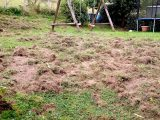 Wildschweine An Der Schmalsgotte Nachrodt Wiblingwerde within size 1200 X 675