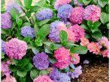 Winterharte Blumen Fr Den Garten 634349 Hausdesign Pflanze Garten for size 1000 X 1155